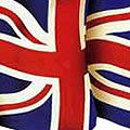 un couple de flamants roses homosexuels adopte un poussin abandonné - Royaume-Uni
